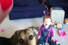 Hund frisst Seifenblasen