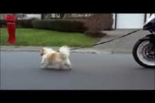 run dog run