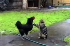 die lieben Katzen