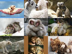 Bilder tiefster Zuneigung