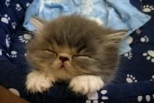 will nur schlafen