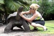 Die Frau mit Ihrem Haustier-die Schidkröte