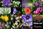 Blumen-erkennen.pps auf www.funpot.net