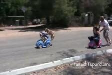 Dog vs Girl car race