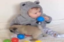 Baby und Mops