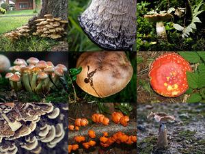 Geniale Aufnahmen von Pilzen