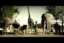 Budweiser Die Zoo Menagerie
