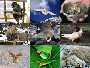 wunderschöne Tierbilder