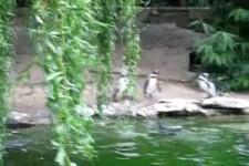 Pinguine und