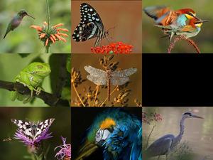 Superb Animal Photography