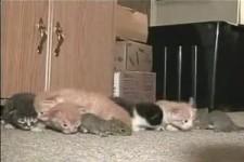 Katze adoptiert Eichhoernchen