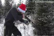 Den Weihnachtsbaum schiessen