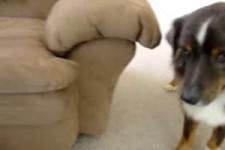 der dressierte Hund