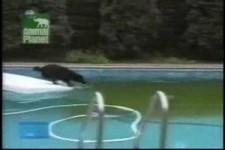 Hund wasserscheu2