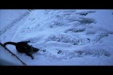 Katze und Schnee