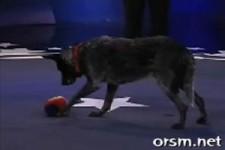 Really Smart Dog