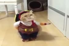Lustiges Halloween-Kostüm