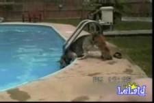 Pool Hopplas