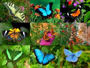 Papillons - wundervolle Schmetterlinge
