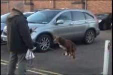 Dog Balancing Dog