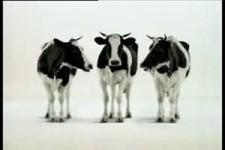Schweizer Milch