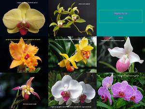 Orchideen und Gedanken ki