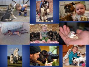 Lustige Bilder mit Tieren