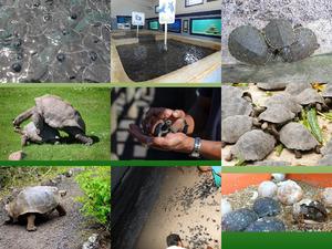 Galapagos Schildkroeten Aufzuchtstation
