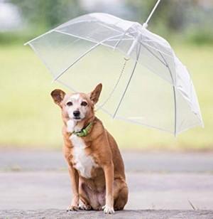 Hunde Regenschirm!