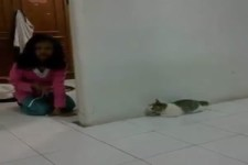 Katze erschreckt sich