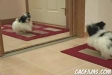 Puppy - goldiger Hund vor dem Spiegel