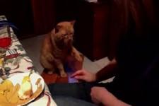 Katze gruesst
