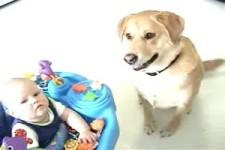 Hunde  Kinder Pierrina 5 11 MB
