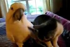 Katz und Papagei