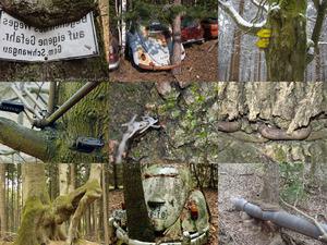 Schilder, Müll und sonstiges, das in Bäumen eingewachsen ist