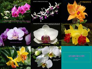 schöne Orchideenblüten