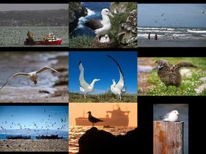 albatrosandseaugull