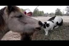 pony und Katze
