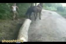 horsekick4