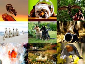 tolle Bilder mit Tieren