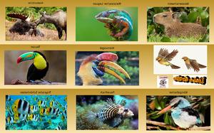 Schöne Bilder aus der Tierwelt