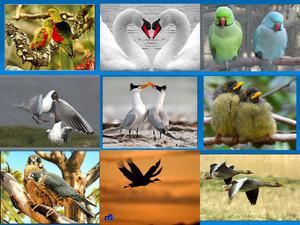 Partnerschaft in der Tierwelt