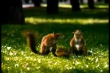 Squirrels at their best 2