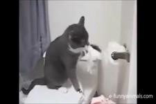 Freche Katzen