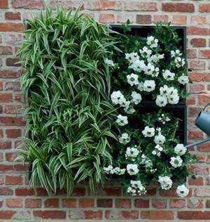 Pflanzgefäß für die Wandbegrünung!