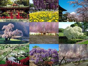 ASHIKAGA Frühling in Japan