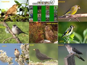 Fluitende vogels ge