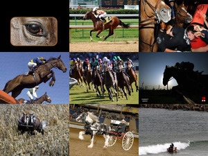 Horses at work- Christine