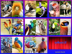 Wunder der Natur Vögel