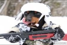 Der krasse Kampfhund